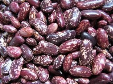 Buy 紫花芸豆