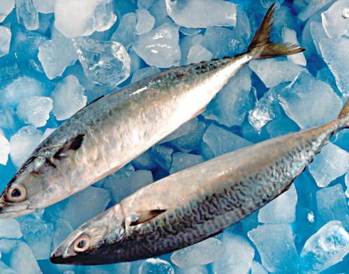 购买 鲐鱼