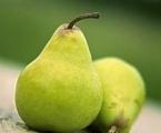 购买 Pear Juice Concentrate