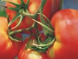 购买 Tomato Paste