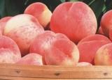 购买 White Peach Puree Concentrate