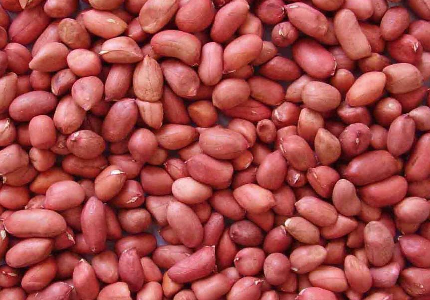 Buy Peanut kernel (long type)