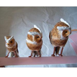 购买 Owl