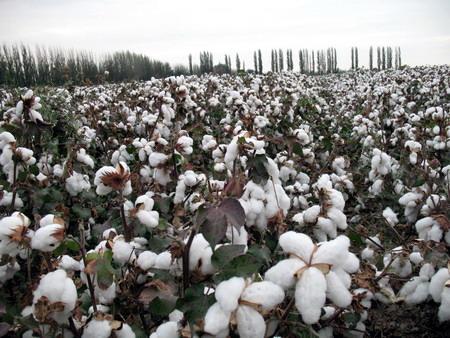 Buy Portable cotton picker