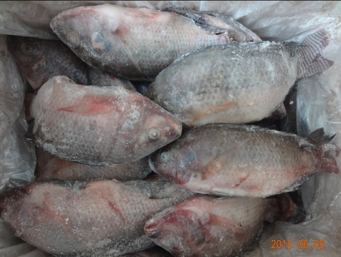Tilapia, catfish, red pomfret