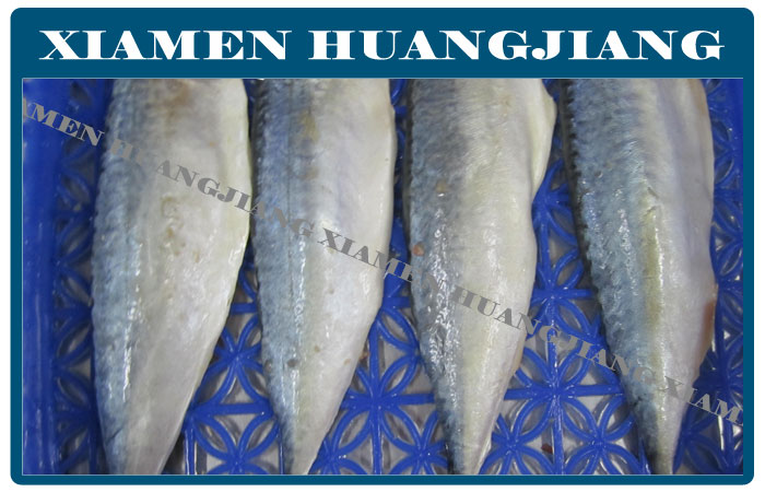 Pacific Mackerel Fillet