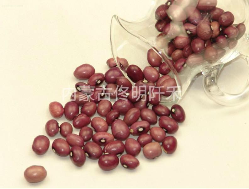 Buy Round pearl kidney bean