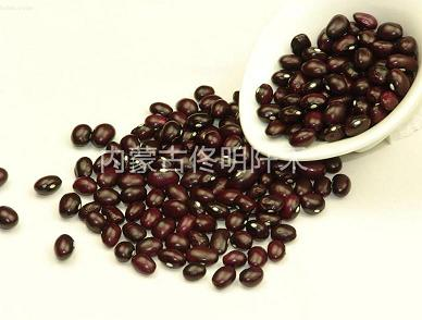 Buy Round purple Kidney Bean