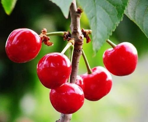 Buy Acerola Extract Powder, Spray Dried Acerola Fruit Powder, Instant Juice Powder, Beverage Powder, Health Food