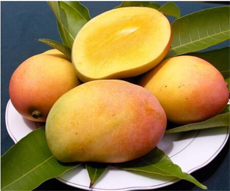Buy 100% Natural Mango Powder/ Instant Mango Juice Powder/ Spray Dried Mango Powder