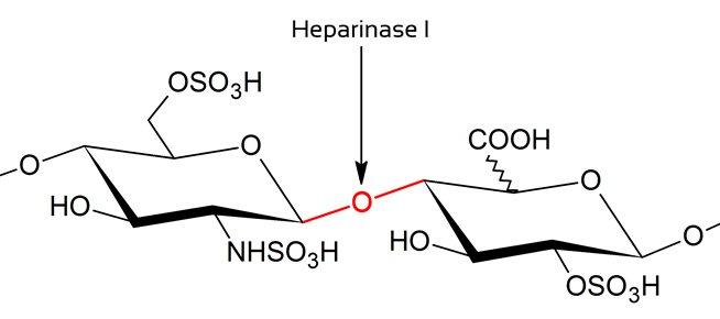 购买 Heparinase I