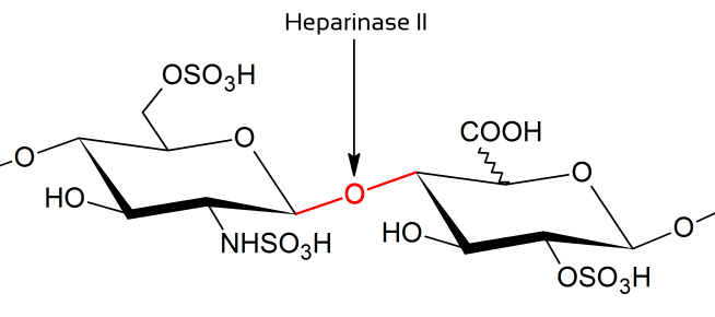 购买 Heparinase II