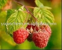 Buy Raspberry extract