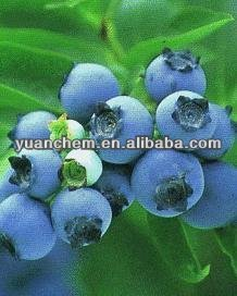 Buy Blueberry extract CAS No. 84082-34-8