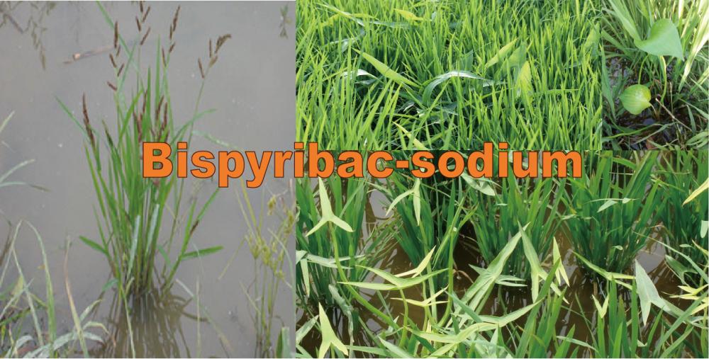 购买 Herbicide: Bispyribac-sodium