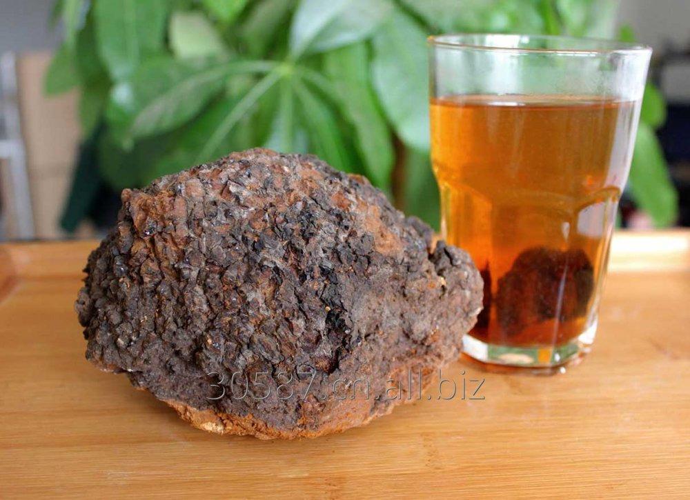 Buy Chaga Mushroom Extract
