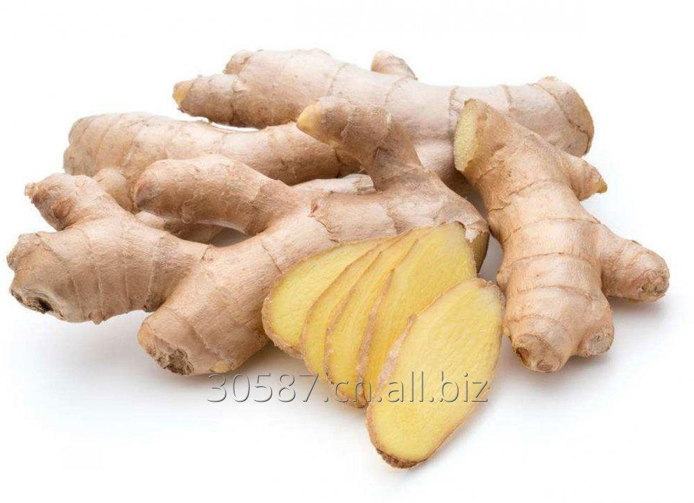 Buy Ginger extract granules