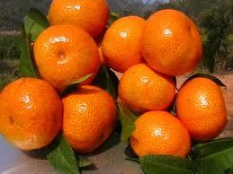 Buy Цзян Сиюй мандарин наньфэн мандарин цзян цитрусовые Китай мандарин экспорт