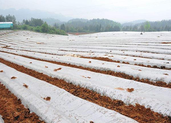 Купить Agricultural Mulching film