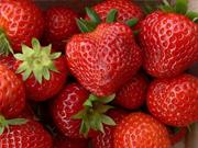 Buy 草莓
