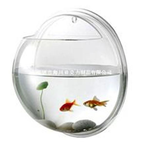 Buy 鱼缸