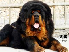 Dogs of elite species