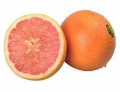 美国葡萄柚
