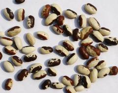花 芸 豆