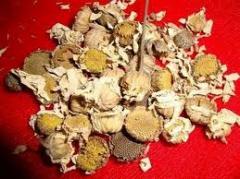 Pyrethrum stem powder