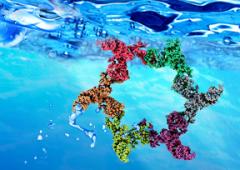 5 ×TBE Buffer (RNA电泳用)