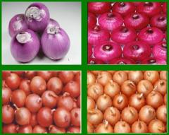Onion (red Onion, Yellow Onion)