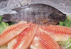 罗非鱼系列产品