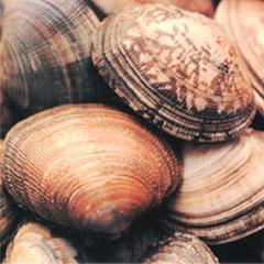 Shells Marine