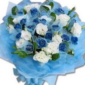 蓝玫瑰白玫瑰01