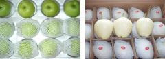 鸭梨, 皇冠梨,酥梨,绿宝石梨