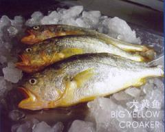 Fish, fresh frozen