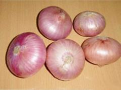 Salad onion