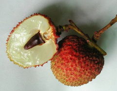 Chinese fresh Litchi fruit(fei tsu hsiao)