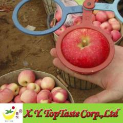 2011 China Fuji Apple
