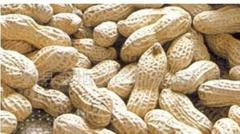 Peanuts in shell