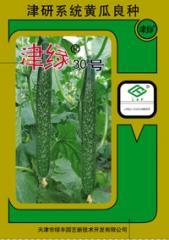 黄瓜种子 - 秋冬温室及春大棚
