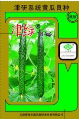黄瓜种子 - 春秋露地