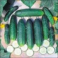 Cucumber, vegetable seed