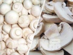 冻干双孢菇