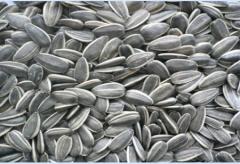 Sunflower seeds 909