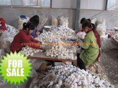 Jinxiang Fresh Normal White Garlic
