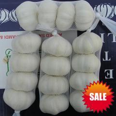 Chinese Red Garlic 2012 Crop - best quality