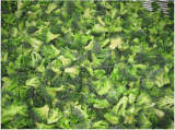 Vegetable Broccoli