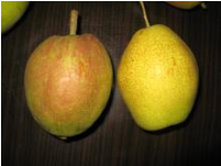 Red fragrant su pear