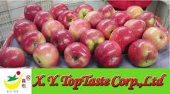 Red Jiguan apple-- XY TOP TASTE